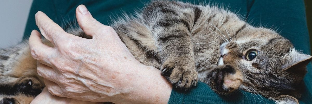 best pets for the elderly